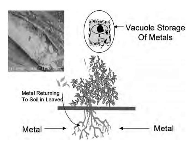 Bioremediation Of Environmental Contaminants In Soil Water And Air
