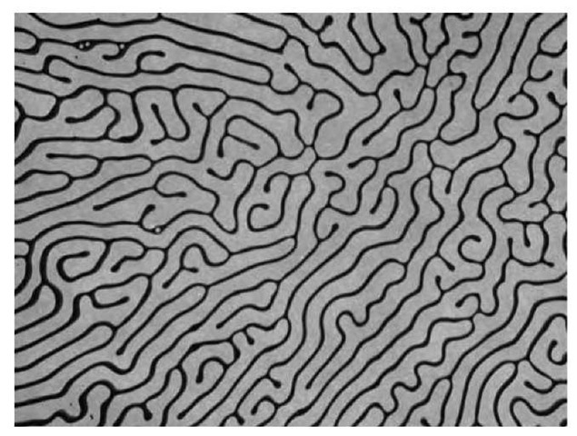Labyrinth instability that results when a 1-mm-thick layer of Isopar M ferrofluid between glass plates is stressed by a magnetic field of about 150 G tangent to the thin dimension of the ferrofluid layer. The line thickness is about 200 mm.