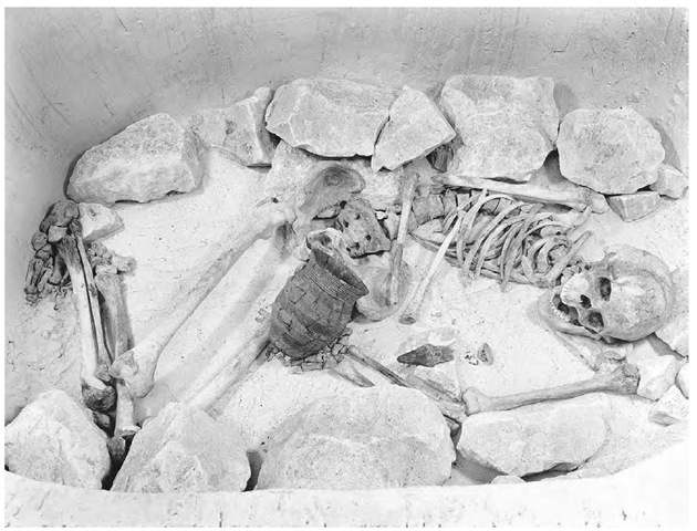 Reconstruction of a Bell Beaker burial from southern England with the skeleton in typical contracted position accompanied by a beaker and a copper dagger in a stone-lined pit.