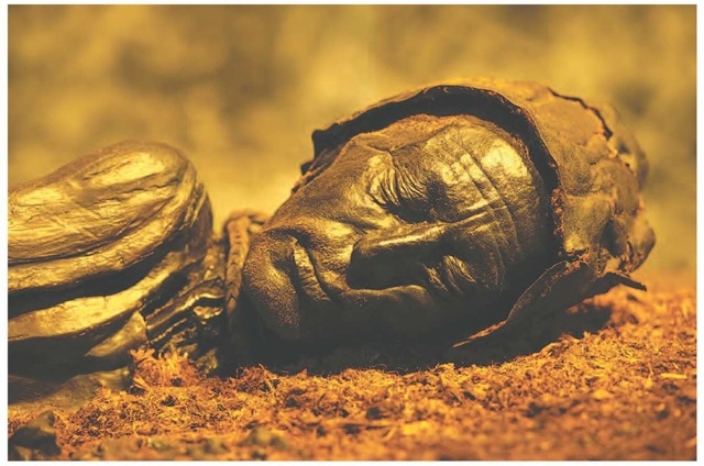 Tollund Man The bog body of the Iron Age man from Tollund Mose in central Jutland, Denmark, c. 220 b.c. His body was deposited in the bog, presumably after being hanged, and was preserved under a thick layer of peat until discovered in 1950.