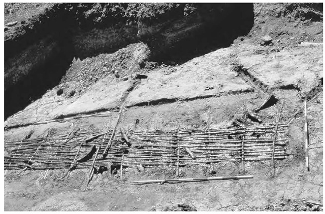 A Neolithic fish weir from Oleslyst, Denmark, made from coppiced wood.