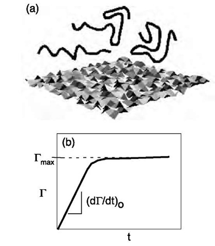Schematic of (a) a heterogeneous surface and (b) evolution of the surface excess (G).