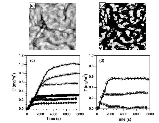 A mixed SAM showing patchy domains of DT in the STM image before (a) and after image processing (b). The size of the image is 200 x 200 nm. Adsorption of (c) P2VP and (d) PEO on homogeneous surfaces of DT (diamonds) and MPA (squares) compared to adsorption on a patchy surface (circles). Open symbols correspond to pH=4.5 and filled symbols to pH = 2.