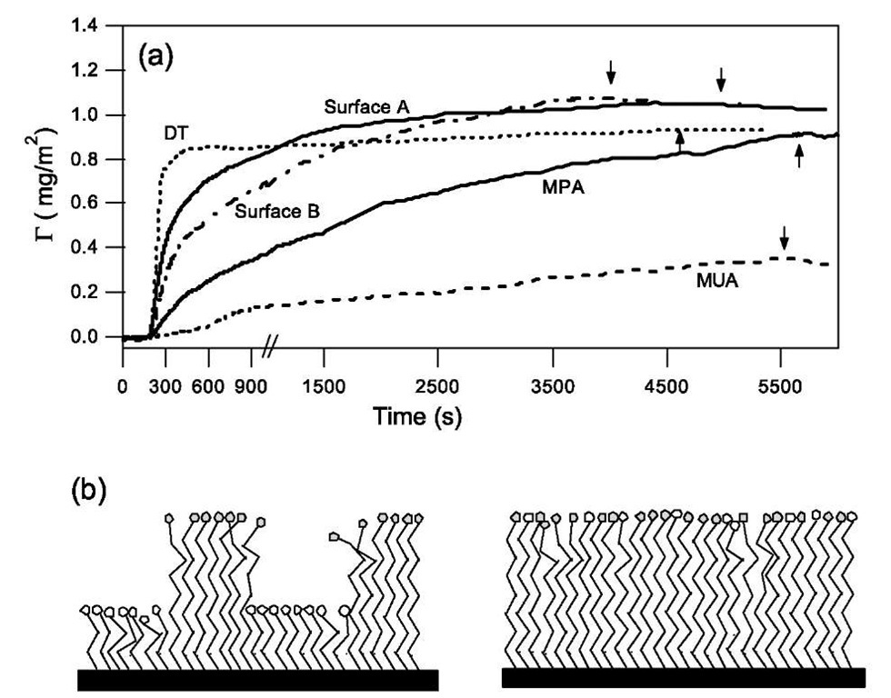 (a) Comparison of the kinetics of BSA adsorption on homogeneous surfaces of DT, MPA, and MUA with the adsorption on heterogeneous surfaces A and B. Arrow indicates time when washing with pure buffer solution was begun. The time scale at the beginning of adsorption has been magnified in the plot. (b) Schematic illustration of heterogeneous surfaces with a well-mixed and a nanometer scale, patch-wise distribution of heterogeneity.