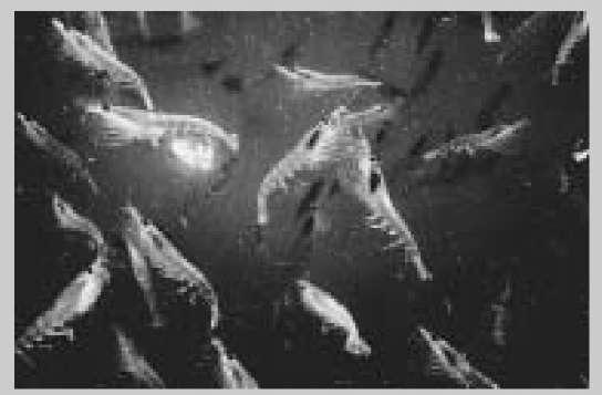 ocean food chain worksheet. food web worksheets for