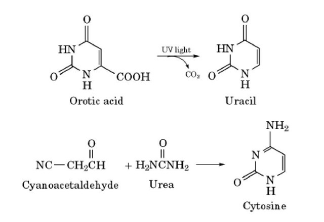 Possible steps in the prebiotic synthesis of pyrimidines.