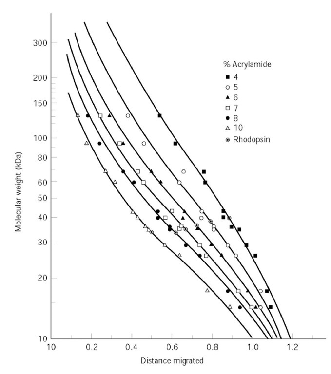 Standard curve of log(molecular weight) versus relative distance migrated in SDS-PAGE. Twelve standard proteins of known size were separated by SDS-PAGE in polyacrylamide gels of six different concentrations. The protein of molecular weight to be determined was rhodopsin.