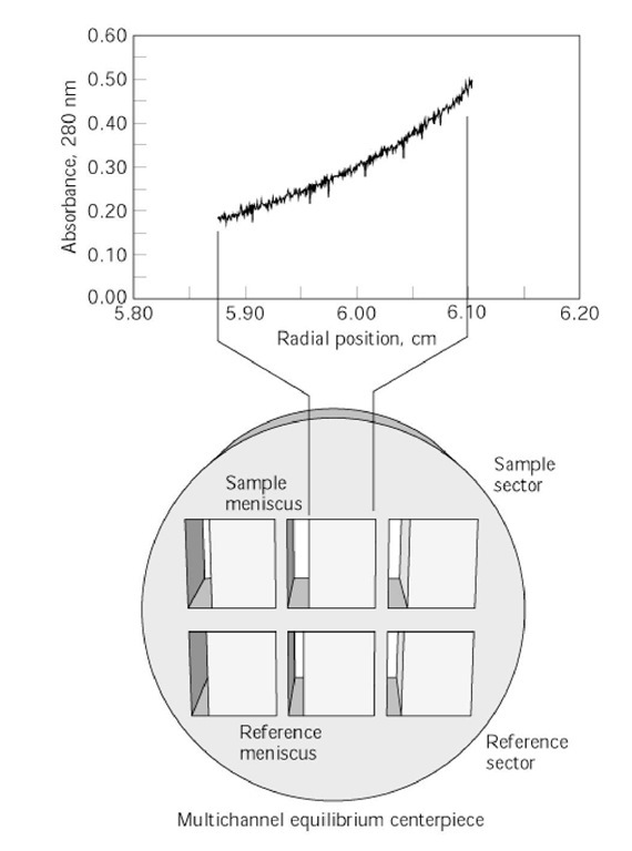Sedimentation Equilibrium Centrifugation (Molecular Biology)