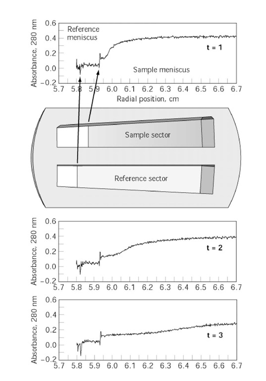 Sedimentation velocity experiment profiles at three different times (t = 1 to 3) in a centrifugation run scanned by absorption optics. The sample and reference solution menisci are indicated. The figure inset depicts the sample and reference channels of the centrifuge centerpiece.