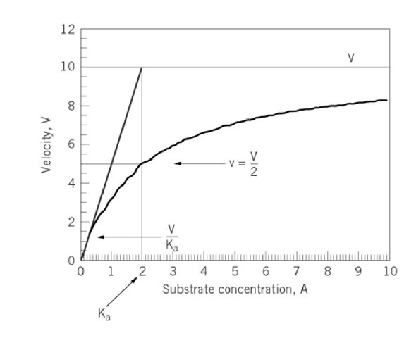 Variation of initial velocity v as a function of the concentration of substrate A as described by Equation 1.