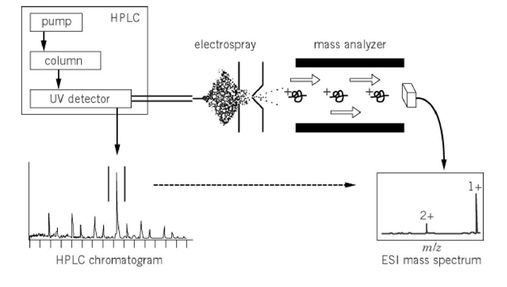 Liquid Chromatography Mass Spectrometry (Molecular Biology)