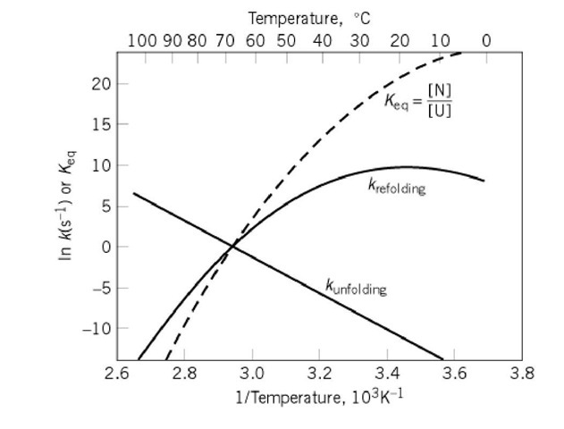 typical temperature dependence of the rates and equilibria of protein  folding transitions not involving intrinsically slow