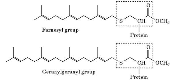 Prenylation (Molecular Biology)