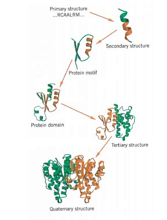 Protein Molecule Structure Diagram Pictures to Pin on ...