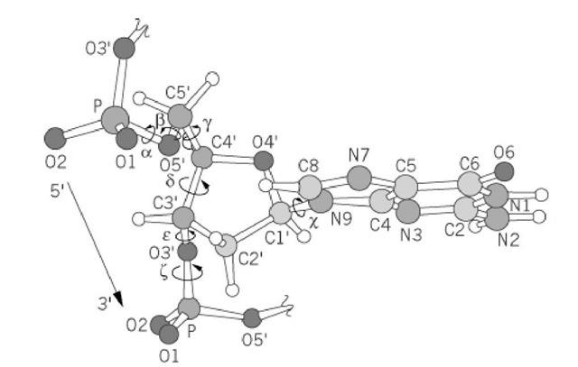 dna structure  molecular biology