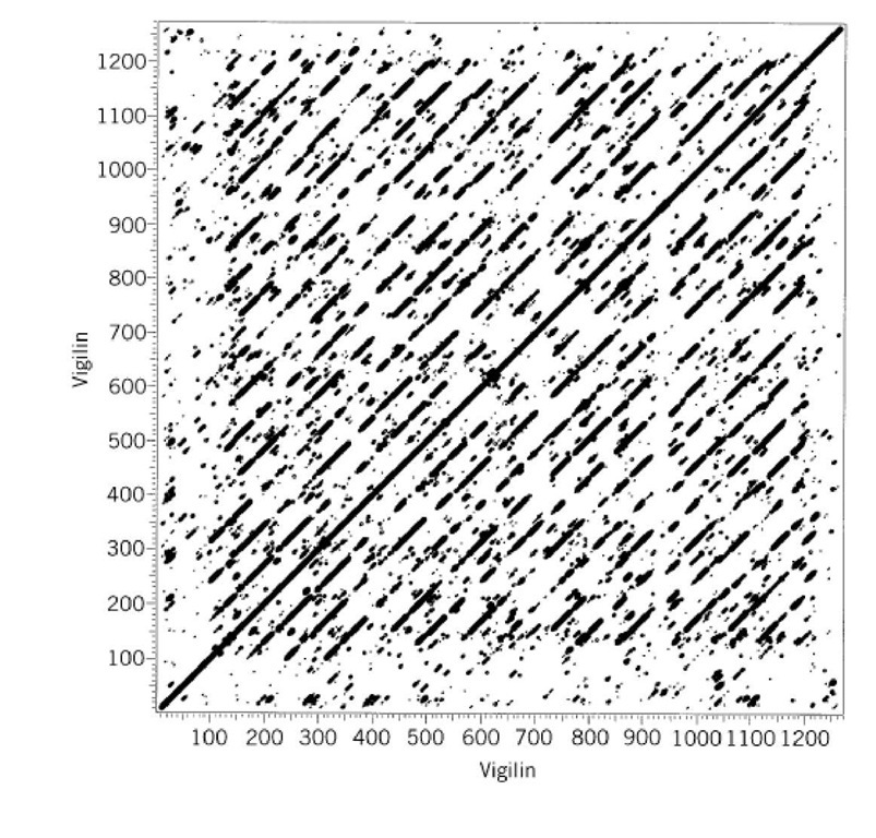 Dot plot showing 15 tandemly repeated KH domains in the chicken vigilin sequence. The larger the dots, the higher the matching segment score. A break in the diagonals spanning position 940 indicates a ~ 40-residue insertion in one of the domains.