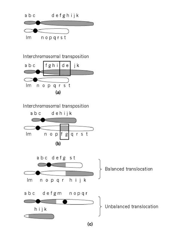Translocation, Chromosomal (Molecular Biology)