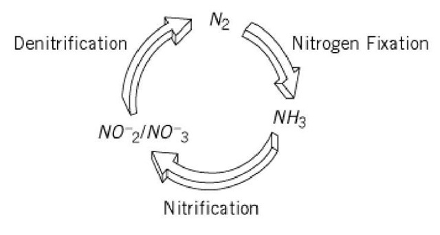 Nitrogen fixation molecular biology simplified diagram of the biological nitrogen cycle ccuart Gallery