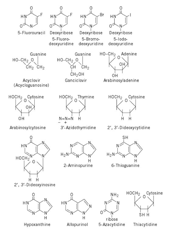 Nucleobase and nucleoside analogues of biological or medical significance.
