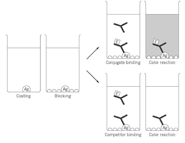 Enzyme-Linked Immunosorbent Assay (ELISA) (Molecular Biology)