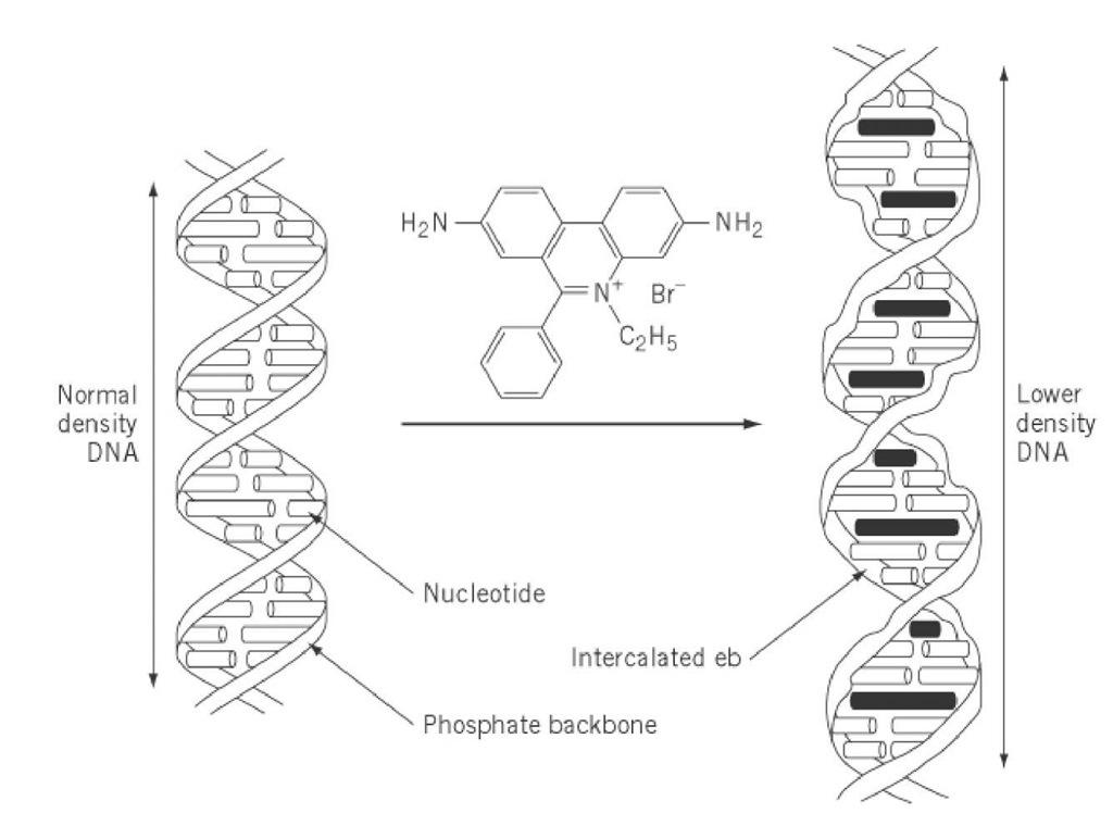 Ethidium Bromide (Molecular Biology)