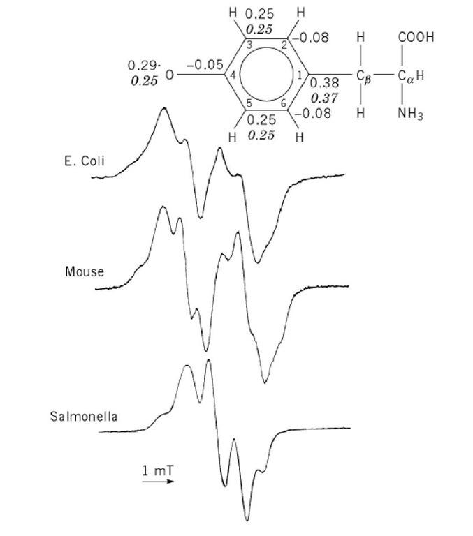 electron spin resonance spectroscopy principle pdf