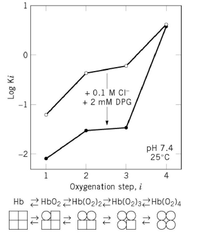 Hemoglobin (Molecular Biology
