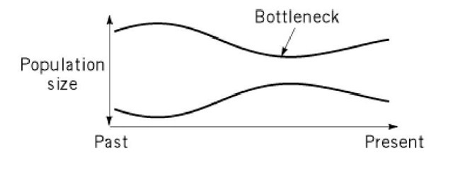 Bottleneck effect due to a transient decrease in the population size.