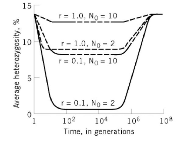 Decrease in the heterozygosity of individuals of a population resulting from the bottleneck effect. The bottleneck size is given by N0. The intrinsic growth rate is given by r. Following the bottleneck, it is assumed that the population grows uniformly (2).