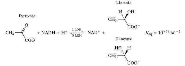 lactate dehydrogenase (ldh) (molecular biology), Skeleton