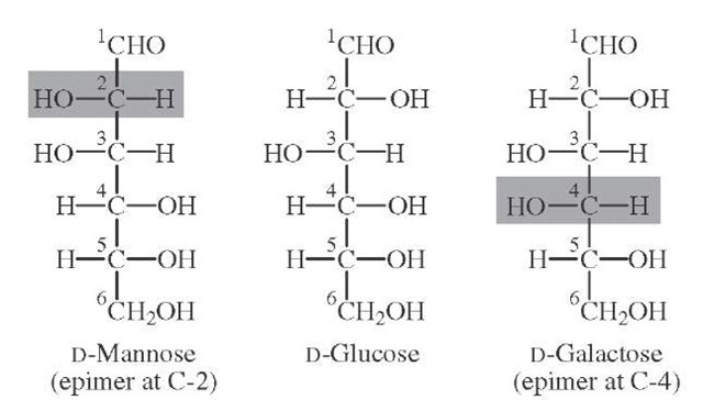 Relationship between D-glucose and D-galactose (4-epimer), and D-mannose (2-epimer).