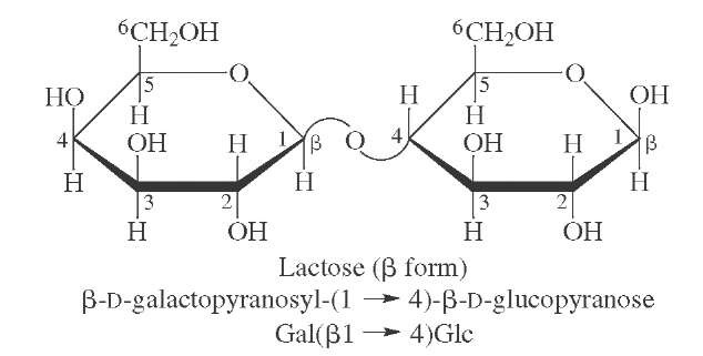 Structure of lactose, the major sugar present in milk.