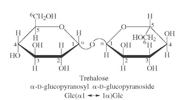Structure of trehalose, the predominant sugar present in the blood of insects.