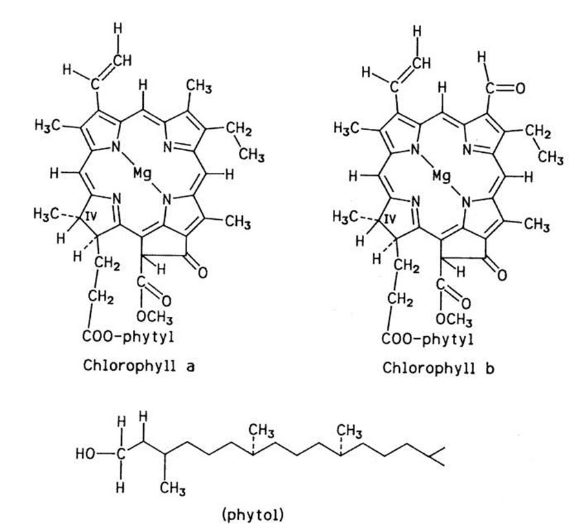 Structure of chlorophylls a and b.