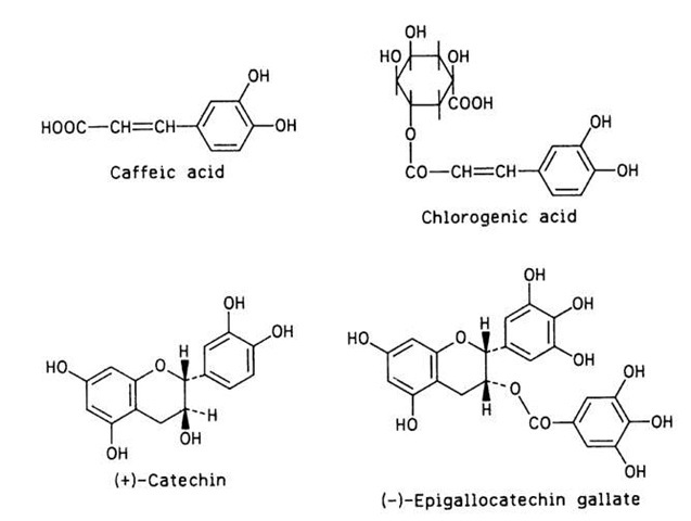 Four phenolic compounds involved in enzymatic browning.