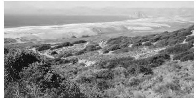 An example of a deflation zone (low ground behind fore dunes) and an example of barchan dunes in Morro Bay, California.