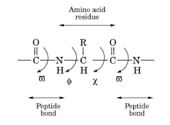Ramachandran Plot Molecular Biology