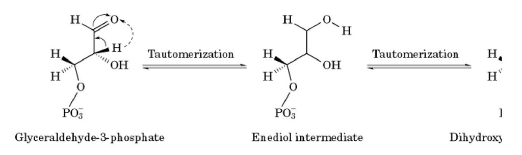 Two examples of keto-enol tautomerization. A proton from the a-methylene of either glyceraldehyde-3-phosp] dihydroxyacetone-phosphate is transferred to the carbonyl; after the depicted electron rearrangement, a structural isomer