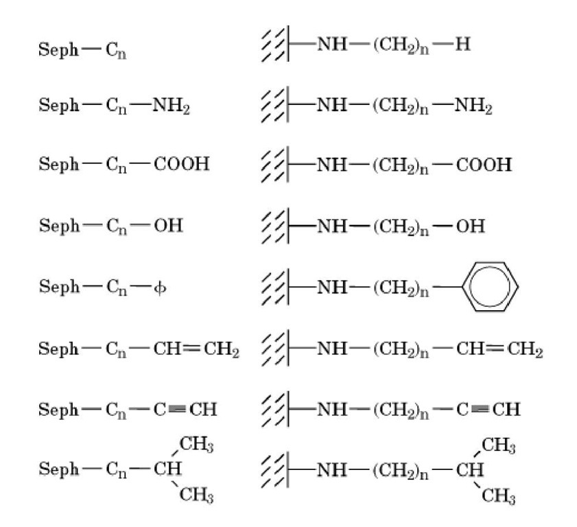 Examples of homologous series of alkylagarose derivatives (Seph-Cn-X) that can be used for HC (1).