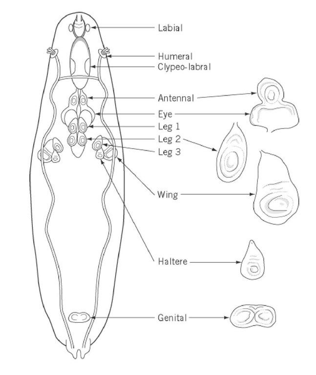 pdf the orthopaedic physical exam