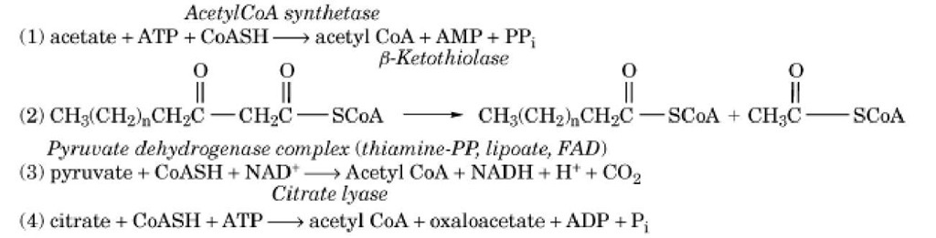 Enzymes that Form Acetyl CoA