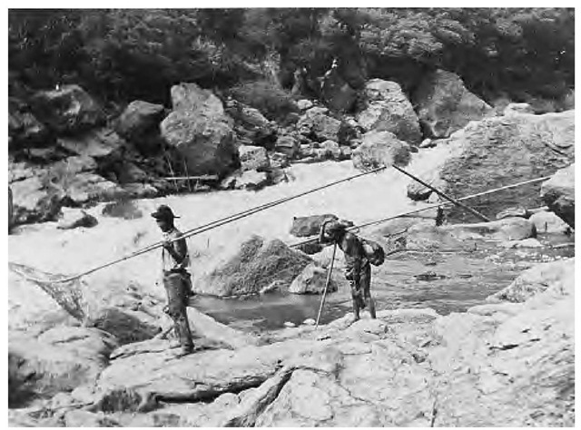 Yurok men fish on the Klamath River (1908). Among the Yurok, acorns and salmon were riverine staples; other fish and shellfish were also eaten along the coast.