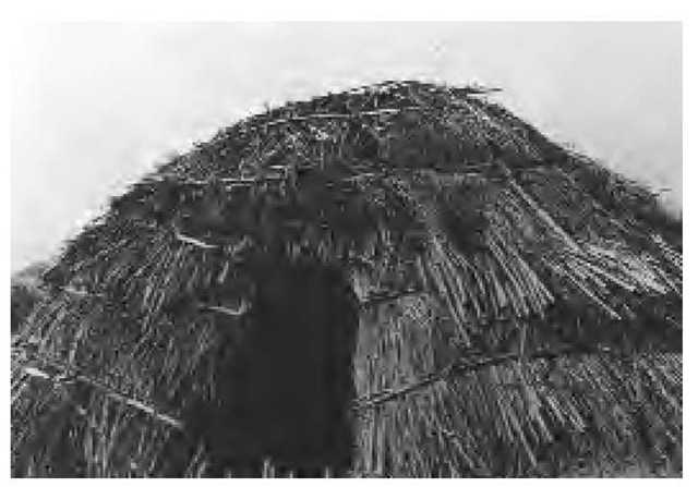 The Owens Valley Paiutes built several kinds of structures. Winter dwellings like this (early 1900s) were conical, semisubterranean, and built on a pole framework covered with tule, grass, and sometimes earth.