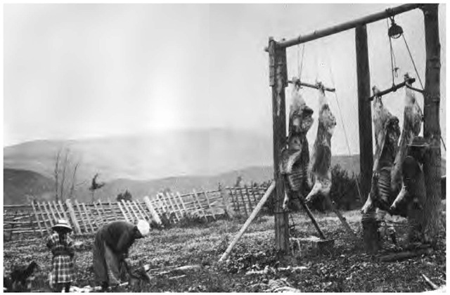 As with many Native American tribes, material goods became evenly distributed through potlatch ceremonies. Here, oxen meat is being prepared in anticipation of a potlatch in 1924.