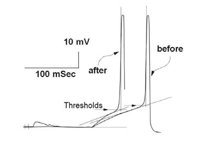The first action potential generated within responses to the CS+ before and after classical conditioning in snail neuron. The method of the level of spike generation determination, as the level of intersection of two tangents is shown (explanations in the text). Threshold levels are shown by the pointers. Responses were aligned in the points of EPSP beginning. Short vertical lines at the start of frame are times of tactile stimulus presentations.