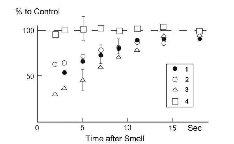 Inhibition in the olfactory bulb of frog after adequate stimulus. 1) Amplitude of spikes in response to olfactory nerve stimulation after presentation of smell; 2) evoked potential in olfactory bulb after smell; 3) the same in the embryonic olfactory cortex of forebrain; 4) evoked potential in the olfactory cortex after stimulation of olfactory tract. Control, before adequate stimulation 100%.
