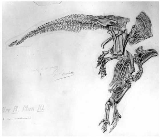 20. Lavalette's drawing of the Iguanodon skeleton seen in Figure 19