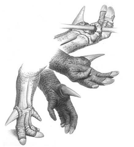 21A. Iguanodon's hand, showing a range of uses