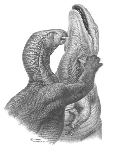 21B. The stiletto-like thumb of Iguanodon in action
