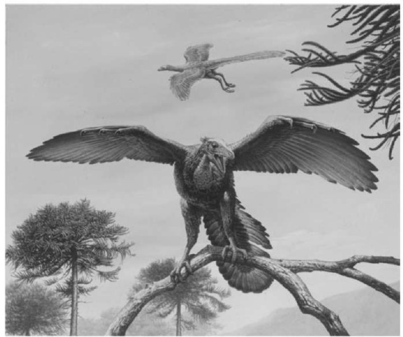34. Restoration of the living Archaeopteryx